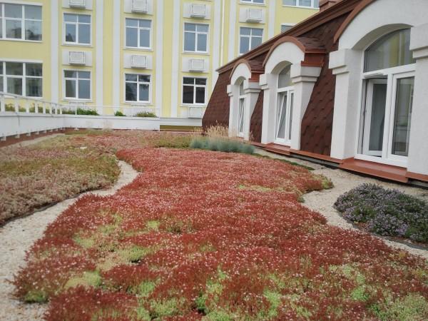 Зеленые крыши www. sadovi. com. ua